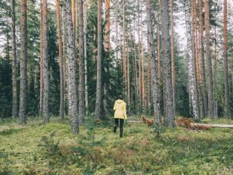 Bild på Urskogen