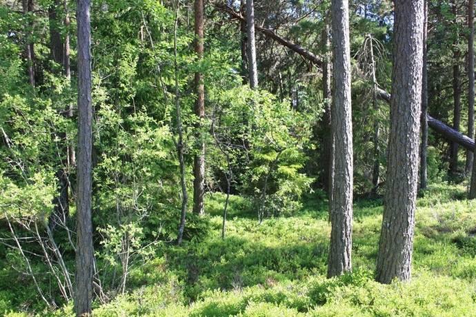 Bild: gård/skog på Blomskogs-Öbyn, Årjängs kommun Blomskog