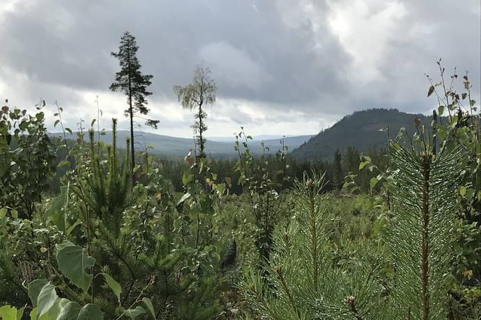 Bild: gård/skog på Karabäcken, Vansbro kommun