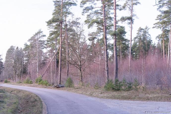 Bild: tomt på Lilla Skarrievägen, Sjöbo kommun Skarrie