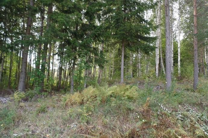 Bild: tomt på Gräsudden, Åtsjön, Lindesbergs kommun Gräsudden