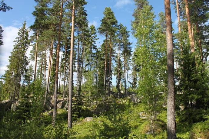 Bild: gård/skog på Högsveden, Gagnefs kommun