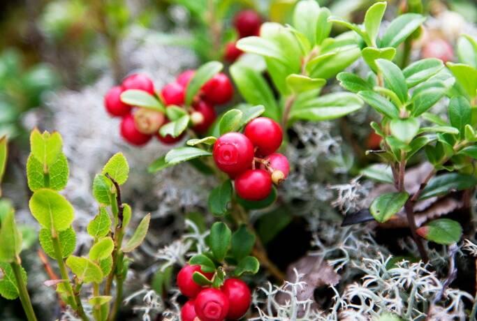 Bild: gård/skog, Rättviks kommun