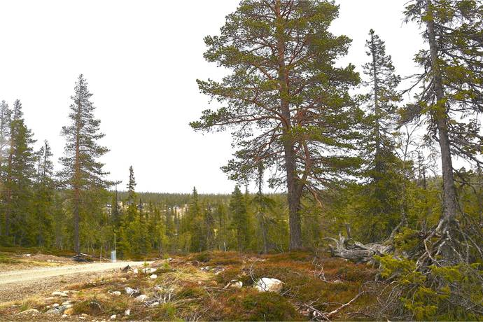 Bild: tomt på Storhogna Rönnvägen, Bergs kommun Berg