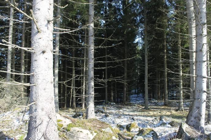 Bild: gård/skog på Arnås 2:16, Tranemo kommun Tranemo