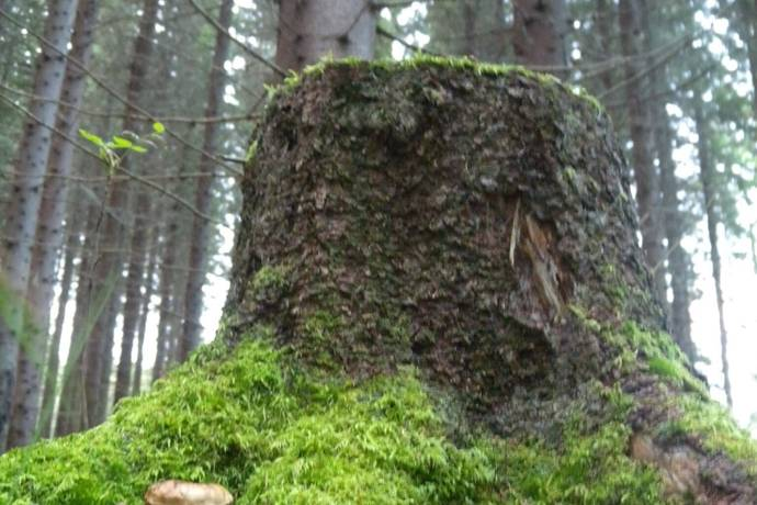 Bild: 2 rum gård/skog på Måsvägen 41, Falu kommun