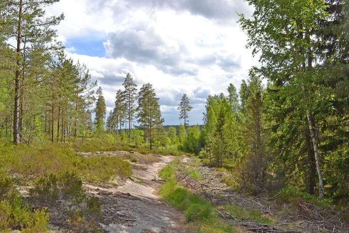 Bild: gård/skog på Ranglebyn, Säffle kommun Kila