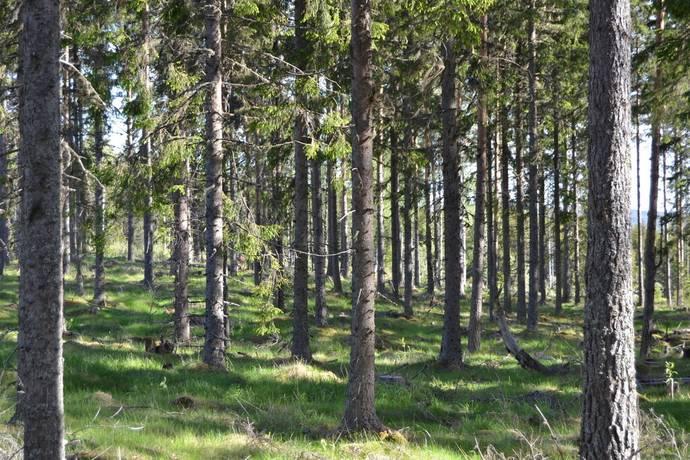 Bild: gård/skog på Kläberget, Gagnefs kommun