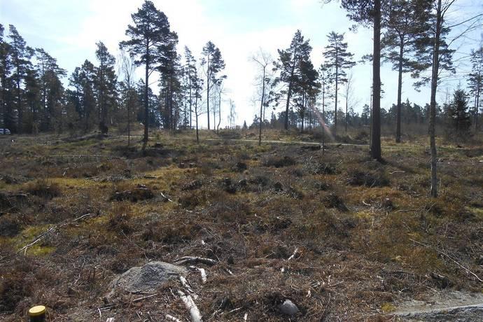 Bild: tomt på Förängsudden 225b, Norrtälje kommun Blidö