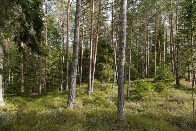 Bild: tomt på Sjöskogen Skogsgläntan 4, Nyköpings kommun Nävekvarn