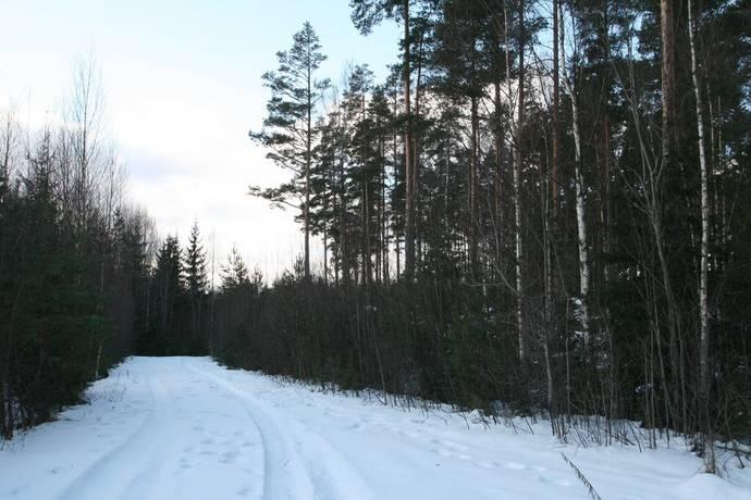 Bild: gård/skog på Trollbo 10, Säters kommun Stora Skedvi