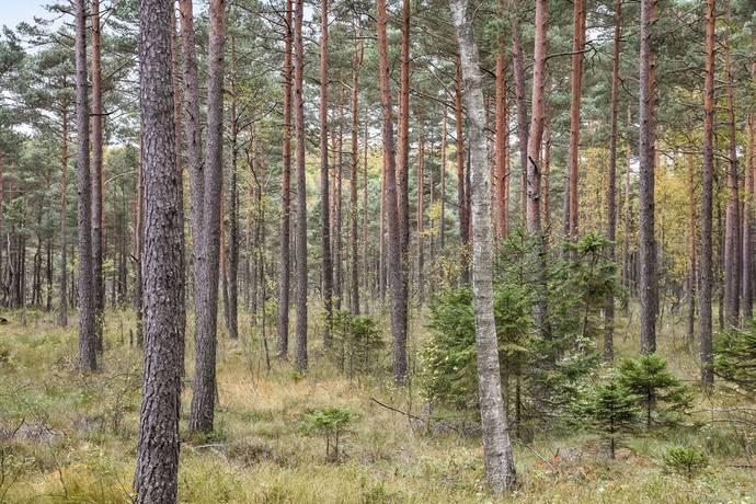 Bild: gård/skog, Örkelljunga kommun Skånes Fagerhult