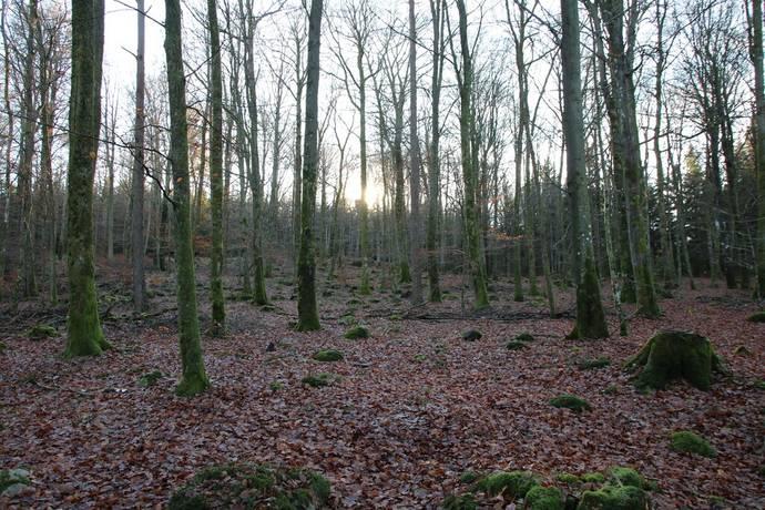 Bild: gård/skog, Ängelholms kommun Brekille