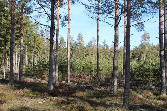 Bild: gård/skog på Ramstad gård, Västerviks kommun Gamleby