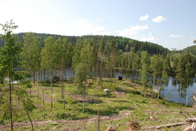 Bild: tomt på Uppsal, Årjängs kommun Holmedal
