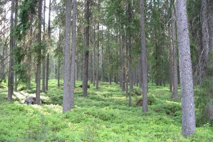Bild: övrigt på Obebyggd skogsfastighet Åsteby 1:156 & Åsteby 1:277, Torsby kommun Åsteby