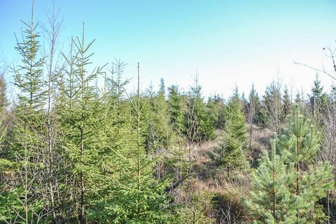 Bild: gård/skog på Borås Risa 1:14, Borås kommun Hedared