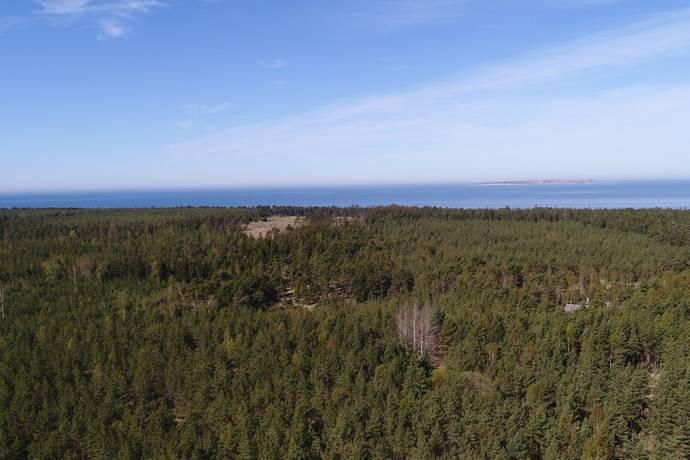 Bild: gård/skog på Eksta Bjärges, Gotlands kommun Eksta