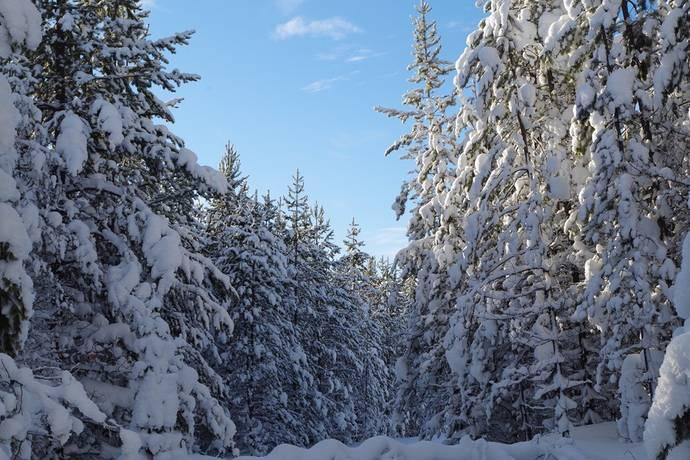 Bild: gård/skog, Bergs kommun Eltnäset