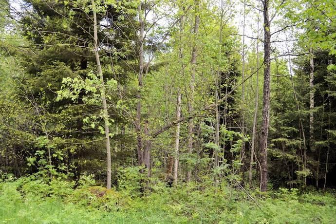 Bild: tomt på Djuplyckevägen 14, Motala kommun Dansby