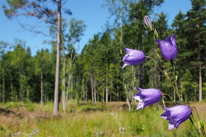 Bild: tomt på Björköören 13, Norrtälje kommun Gräddö