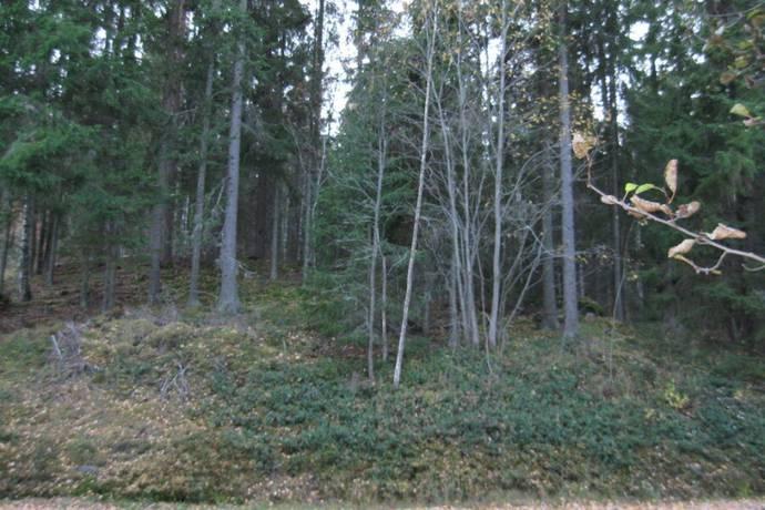 Bild: tomt på Sundsudden, Hällefors kommun Sundsudden/Sävenforsagen