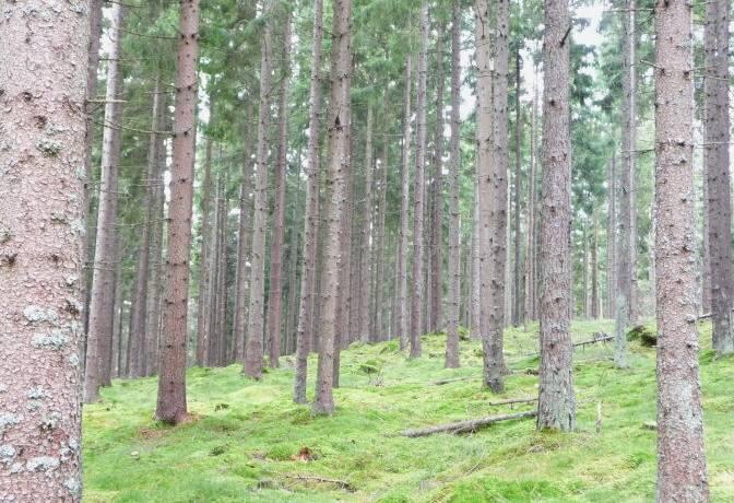 Bild: gård/skog på Nickelsbo 203, Hylte kommun