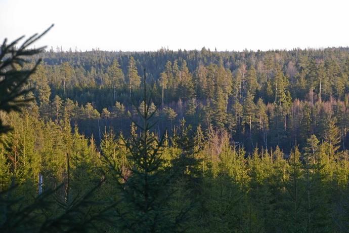 Bild: gård/skog på Granstorp - bolagsskog, Gnosjö kommun Ca 12 km norr om Gnosjö