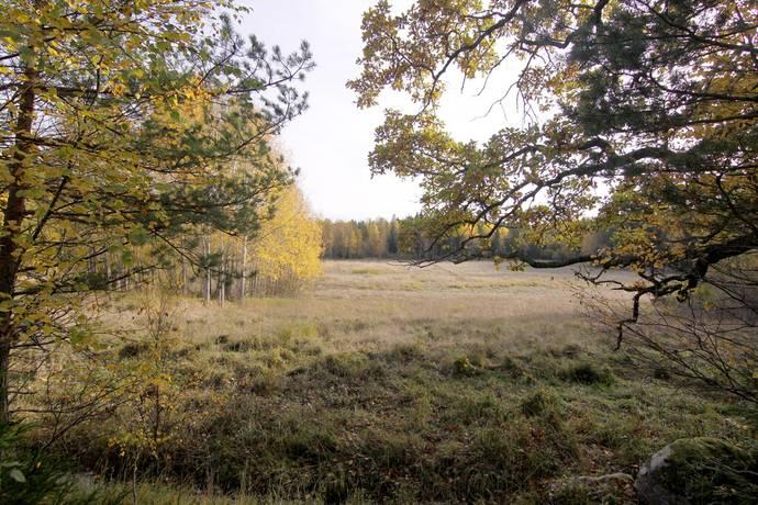 Bild: gård/skog på Program Ektorp, Österåkers kommun