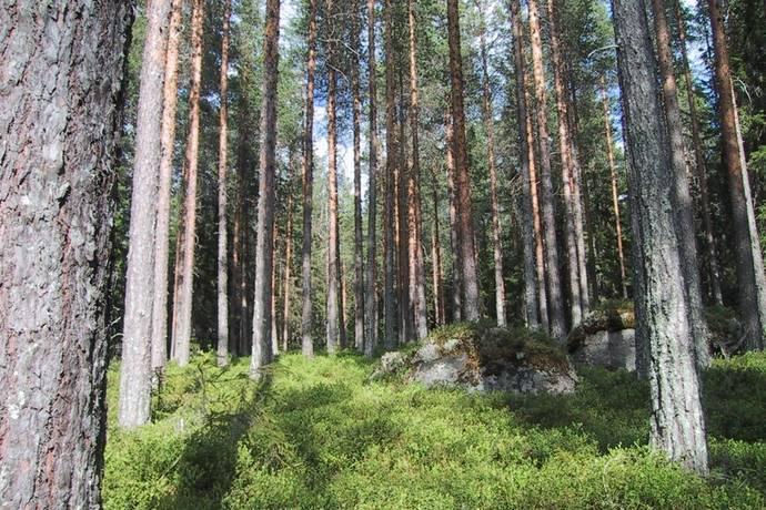 Bild: gård/skog på Tramsta, Östersunds kommun TANDSBYN