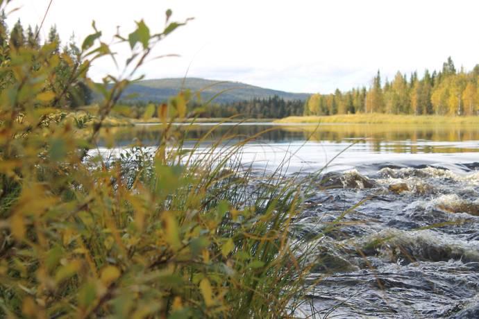 Bild: 4 rum gård/skog på Vägsele 40, Lycksele kommun Vägseleberget