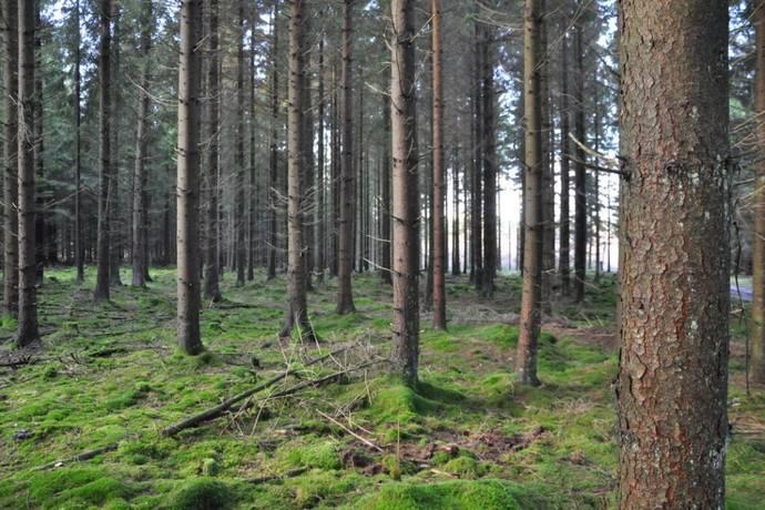 Bild: gård/skog, Eslövs kommun Billinge