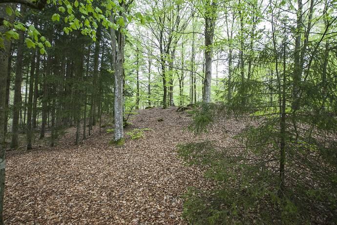 Bild: tomt på Humlestigen 1, Örkelljunga kommun Sjöhultet