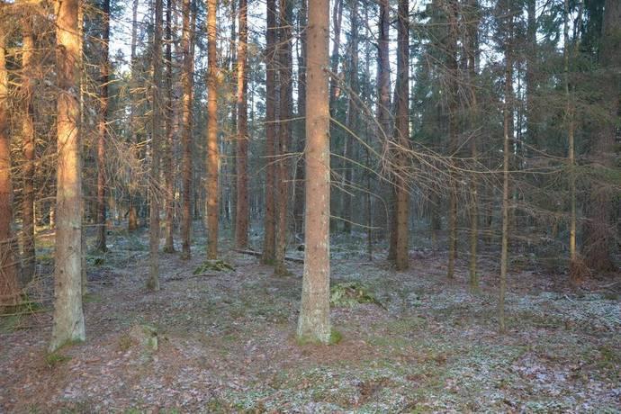 Bild: gård/skog på Karsmossen, Mariestads kommun