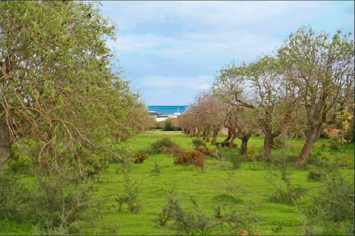 Bild: tomt på Plot, Mallorca - Porto Colom, ES, Spanien Porto Colom