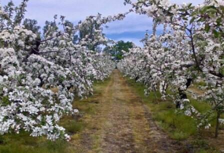 Bild: gård/skog, Simrishamns kommun Raskarum
