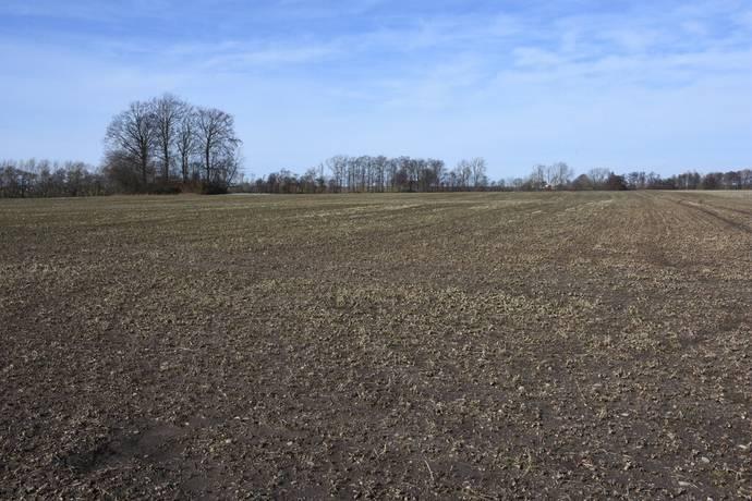 Bild: gård/skog på Åkermark i Köpinge, Ystads kommun