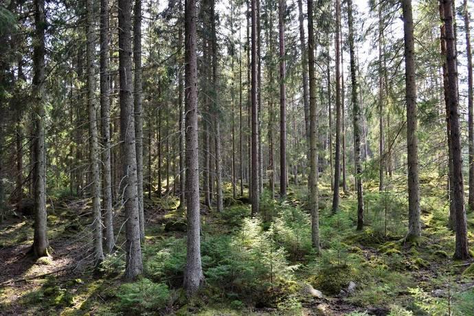 Bild: gård/skog på Ekeberg, Uppvidinge kommun Gödeshult