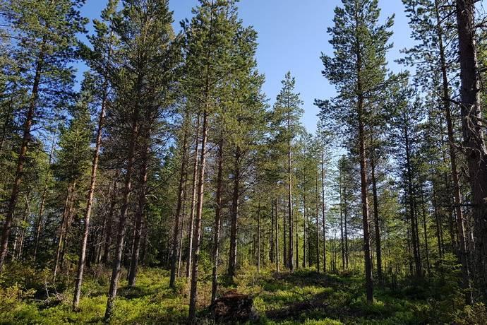 Bild: gård/skog på Skogsfastighet-Venjan, Mora kommun