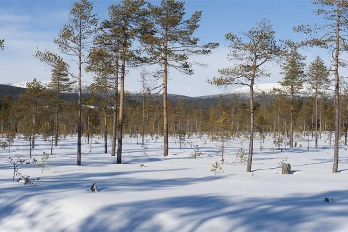 Bild: tomt på Gräshed Annas väg 55, Malung-Sälens kommun Stöten, Sälen