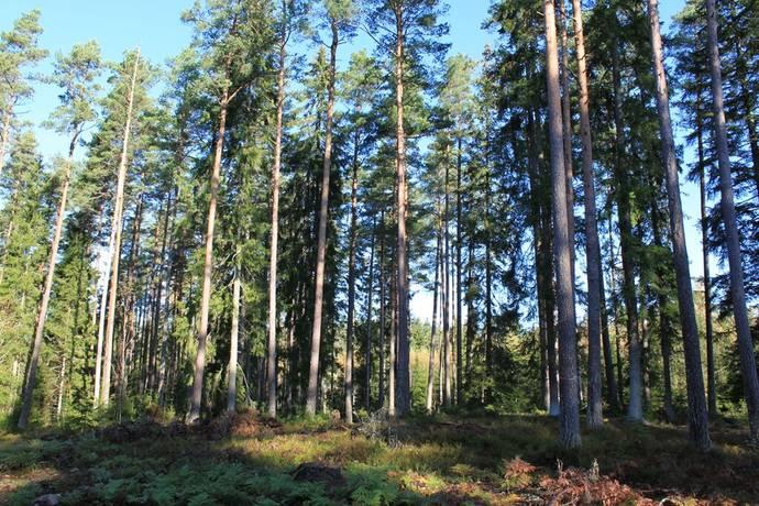 Bild: gård/skog, Älmhults kommun Älmhult