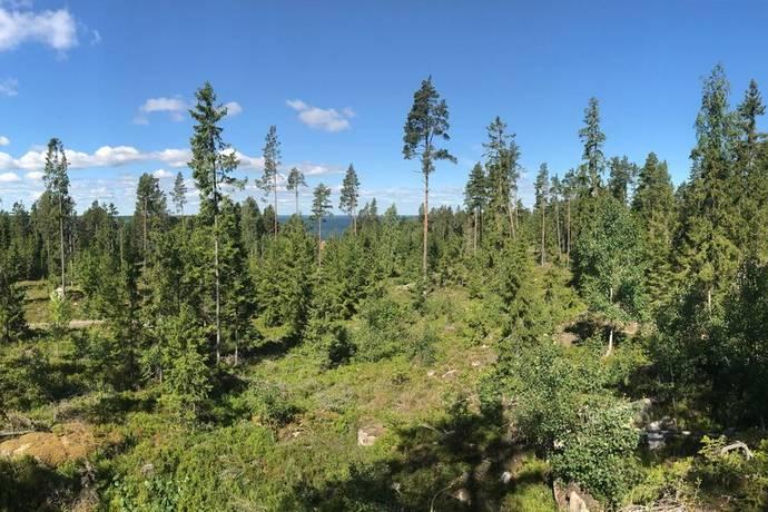 Bild: tomt på Svartviken Källarberget avstyckning pågår, Tierps kommun Hållnäs