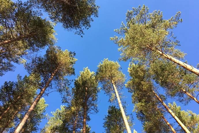 Bild: gård/skog på Skogsfastighet, Rättviks kommun Gulleråsen
