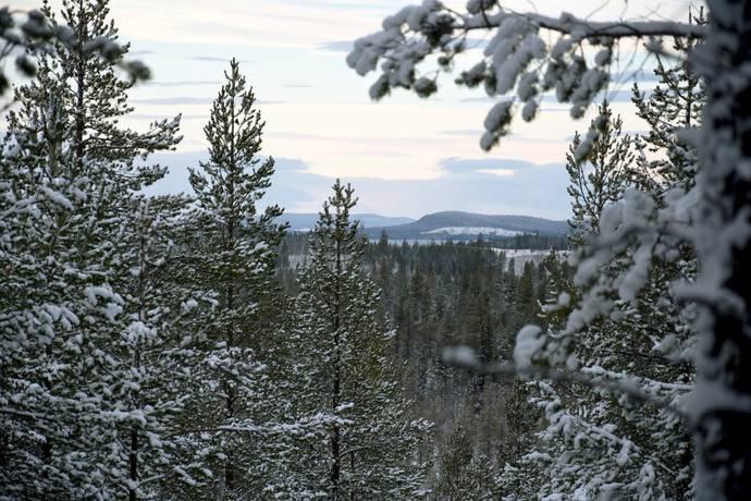 Bild: gård/skog på Ersnäs, Arvidsjaurs kommun