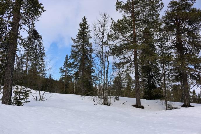 Bild: tomt på Niss Oskarsväg, Malung-Sälens kommun Sälen