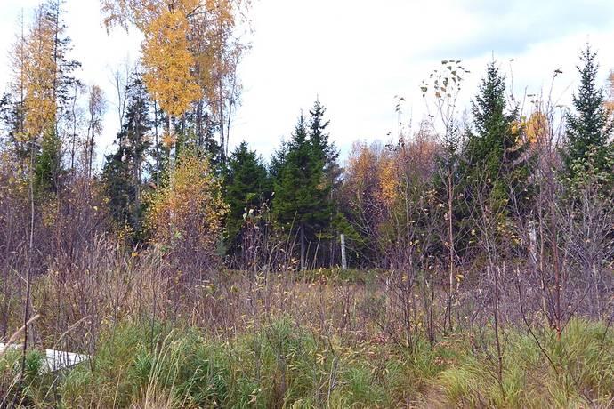 Bild: tomt på Roshöjden 10, Norrtälje kommun Gräddö - Fagervik