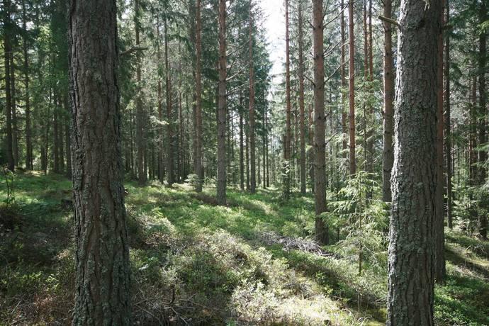 Bild: gård/skog på Östmark och Rådom, Torsby kommun Östmark och Rådom