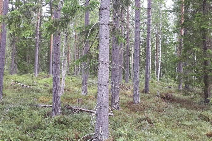 runåberg