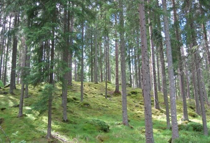Bild: gård/skog på Aspa, Lindesbergs kommun Gusselby