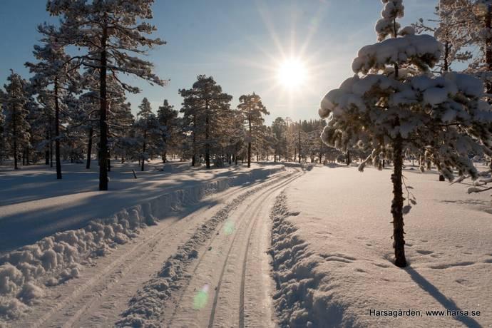 Bild: tomt på Harsa Svemarksvägen 50, Ljusdals kommun JÄRVSÖ, Harsa